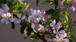 Apple Blossom Liberty Espaliered Apples