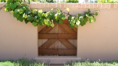 cedar shutters with niagara grape vine
